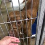 Ils déposent leur chien au refuge et donnent une excuse qui glace le sang du personnel