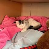 Son chat frôle la mort, elle poste un message sur Facebook pour alerter sur un danger méconnu