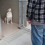 Ce chien revoit son maître pour la première fois après 3 ans, tout le monde au refuge retient son souffle