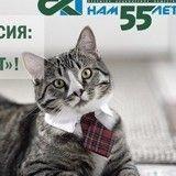 Un chat à louer pour assurer du bonheur à votre nouveau foyer