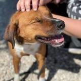 Ce chien adopté après 419 jours au refuge est ramené après 1 journée parce qu'il demande 'trop de travail'