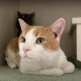 Sauvé à temps d'un incendie, ce chat porte quelque chose sur son dos qui en dit long sur son caractère (vidéo)