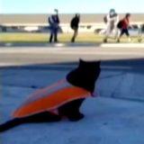Chaque jour, ce chat noir veille sur la sécurité des écoliers de son quartier