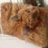 Un chat écrasé transformé en sac à mains et vendu aux enchères choque le Web