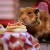 Le dîner de Saint Valentin le plus mignon du monde ! (Vidéo)