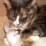 La saison des amours chez les animaux domestiques
