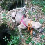 Après 3 semaines coincé dans une grotte isolée, ce chien est sauvé par un randonneur (Vidéo)