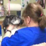Elle maltraite un chien dans un salon de toilettage mais n'avait pas remarqué un détail (Vidéo)