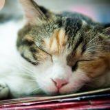 Des chats et des livres : une petite librairie devient un refuge pour chats errants