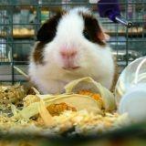 San Francisco : la vente d'animaux en animaleries bientôt interdite ?