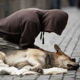 A Avignon, un nouveau centre d'accueil s'ouvre pour accueillir les sans-abris et leurs chiens