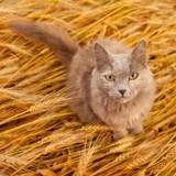 """Alimentation sans céréales pour chat : Tout ce qu'il faut savoir sur la tendance """"Grain Free"""""""