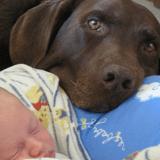 Leur chien se montre agressif avec la nounou, la vidéo de surveillance dévoile un terrible secret