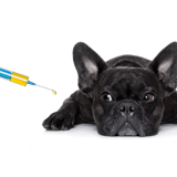 Vaccins des chiens et chats : faut-il en avoir peur ?