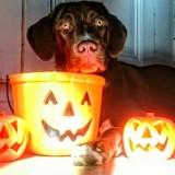 Les plus terrifiantes photos de vos animaux déguisés pour Halloween : chat va trembler !