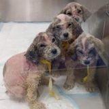 Il trouve des chiots abandonnés dans la rue : le vétérinaire les examine et se trompe sur toute la ligne !