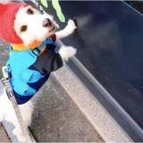 Sa chienne s'arrête net devant l'animalerie et fixe quelque chose : il suit son regard et explose de rire !