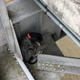 Coincée sur un pont à 36 mètres de hauteur cette chienne a eu une chance incroyable