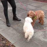 Sa chienne se met à aboyer : elle regarde dehors et comprend qu'elle n'a pas une seconde à perdre