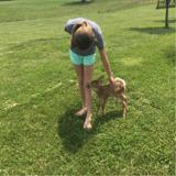 Un faon se lie d'amitié avec une famille... et son chien