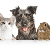 Ministère de la protection animale : Michel Drucker, Pamela Anderson et d'autres stars se mobilisent