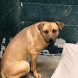 Ils entrent dans le refuge avec leur chien et demandent à l'abandonner : la raison fait frémir les volontaires