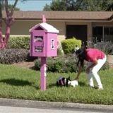 Elle installe une boite à cadeaux pour les chiens du quartier : la réaction des voisins est incompréhensible