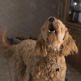 Couvre-feu : Elle ne rentre pas à l'heure et se fait dénoncer par... son chien !