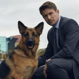 Rex, le célèbre chien policier bientôt de retour sur nos écrans (avec plusieurs nouveautés) !