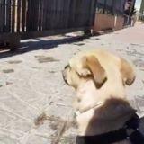 Covid-19 : ce chien est totalement blasé de voir que le parc est fermé !