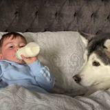 Le Husky est censé laisser bébé dormir : ce qu'il fait à la place coupe le souffle à tout le monde