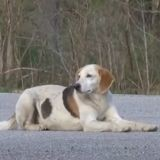 Ce chien errant est devenu une véritable star dans le Missouri pour une raison très émouvante