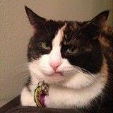16 chats au regard désapprobateur...  qui sont littéralement à mourir de rire !