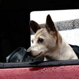 En Slovaquie, 3 femmes meurent en voulant sauver les chiens d'un refuge inondé