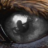"""""""Il faut que ça s'arrête"""" : Laura Smet envoie un message fort contre l'abandon des animaux de compagnie"""