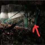 Le bénévole du refuge marche dans l'obscurité : il voit une ombre au sol et son sang se fige