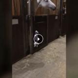 Ce chien ne supporte pas les chevaux et c'est hilarant (Vidéo du jour)