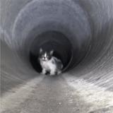 Coincé dans une bouche d'égout, ce chaton a pu compter sur l'aide de volontaires courageux
