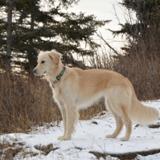 Son chien commence à aboyer furieusement dans la neige : il s'approche et ce qu'il trouve lui glace le sang