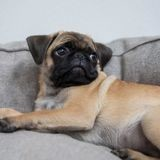 Rachida Dati : le nom de son chien est très évocateur