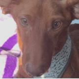 Stupeur en Louisiane : un sadique scie les pattes de chiens vivants
