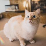 Ce chaton obsédé par les bananes est devenu une star sur internet grâce à des photos... indécentes !