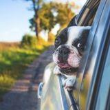 """""""Ils partent avec nous"""" : la nouvelle campagne pour prévenir, sensibiliser et lutter contre les abandons de chiens et de chats"""