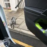 Un homme quitte sa maison pour aller en ville : il croise un chat et reste sans voix