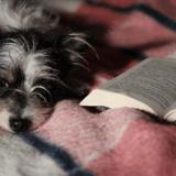 Prix littéraire de la Société Centrale Canine 2019 : découvrez les livres récompensés !