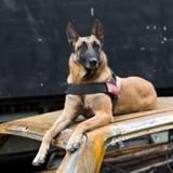 Une expo photos rend hommage aux chiens et chats héros !