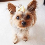 Pour rendre leurs animaux plus beaux sur Instagram, ces maîtres usent d'une pratique dangereuse
