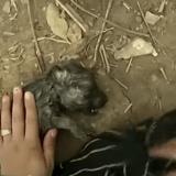 Il voit un chiot sans vie flotter dans la rivière : ce qui arrive les minutes suivantes laisse sans voix