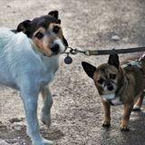Mon-Bibou : un réseau social pour veiller sur les animaux des personnes qui travaillent pendant le confinement