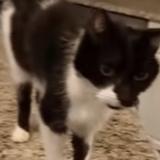 Il entend son chat miauler, n'en croit pas ses oreilles et sort sa caméra (Vidéo)